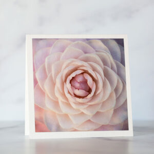 Photo of Blush Pink Camellia Greeting Card