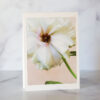 Photo of Butterfly Ranunculus Greeting Card