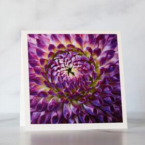 Photo of Purple Dahlia Fine Art Greeting Card