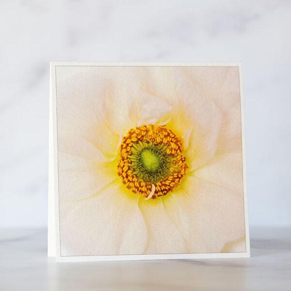 Ranunculus Close Up Greeting Card Photo