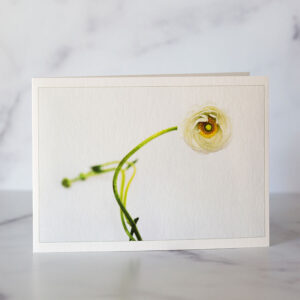 Photo of Single Ranunculas Greeting Card