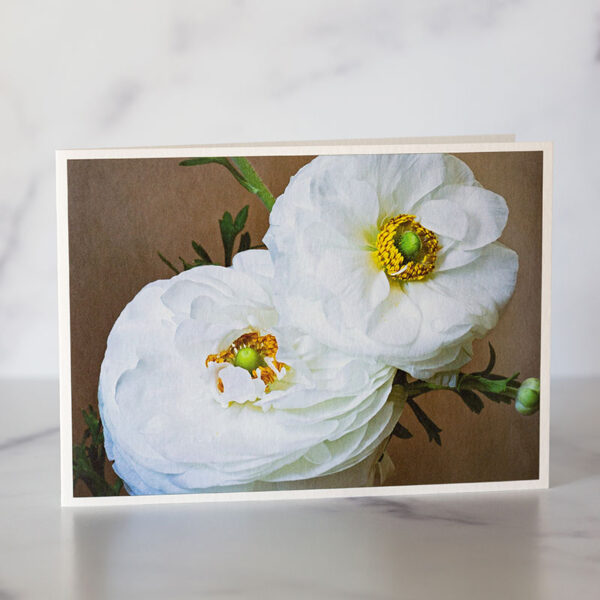 Photo of White Ranunculus Greeting Card