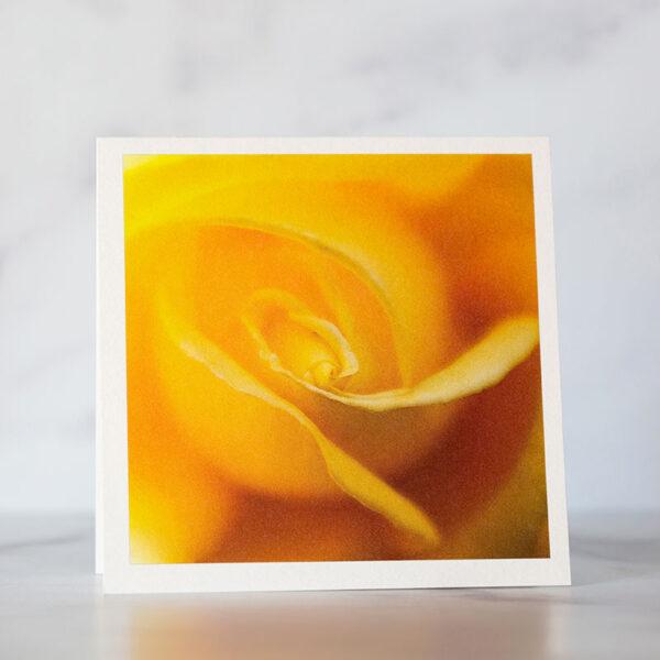 Photo of Yellow Rose Swirl Greeting Card