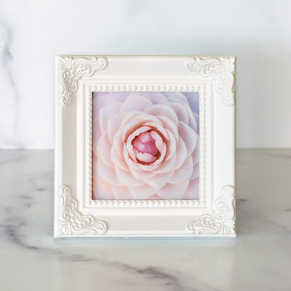 Photograph of a white frame with a photograph of a pink camellia