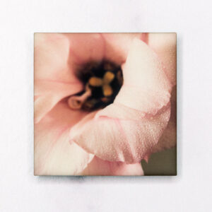 Misted Pink Lisianthus Magnet