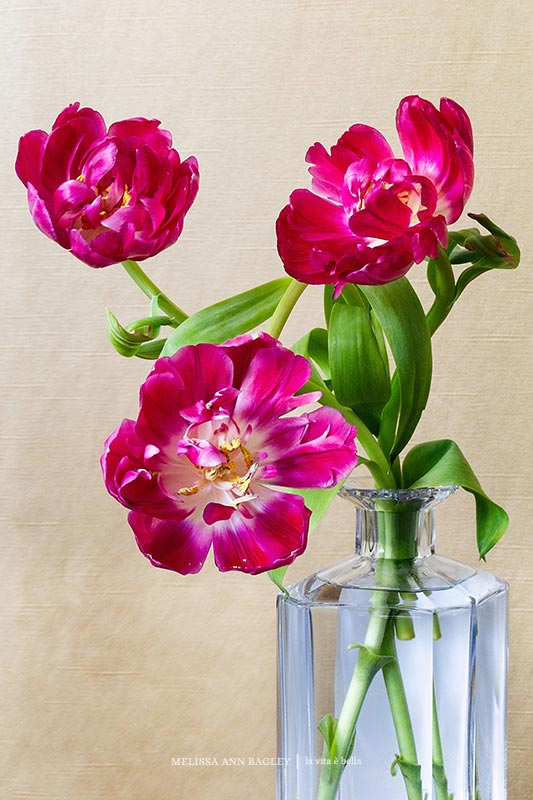 Tulips in Decanter Poster