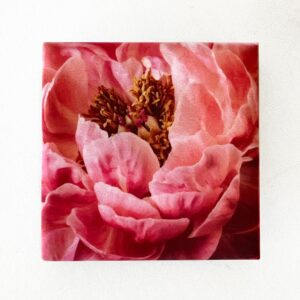 Close Up Peony Magnet by Melissa Ann Bagley