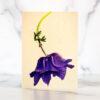 Photo of Anemone Mini Card by Melissa Ann Bagley