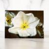 Photo of Creamy White Tulip Mini Card by Melissa Ann Bagley