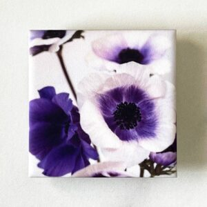 Photo of Purple Anemones Ceramic Magnet by Melissa Ann Bagley