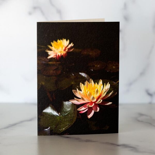 Photo of Water Lily Mini Cards by Melissa Ann Bagley