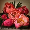 Crop Example of 11x14 and 16x20 Springtime Peonies Fine Art Print by Melissa Ann Bagley