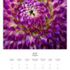 May 2022 wall calendar page with a purple dahlia on it