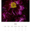 June 2022 wall calendar page with purple peonies on it